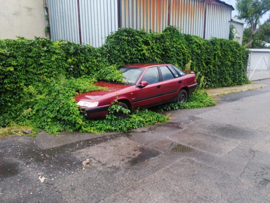 samochód w zaroślach